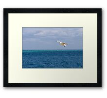 Silver Gull over Water Framed Print