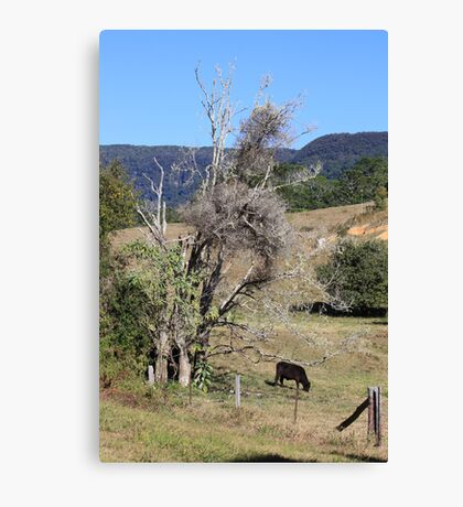 Quiet Winter in the Valley Canvas Print