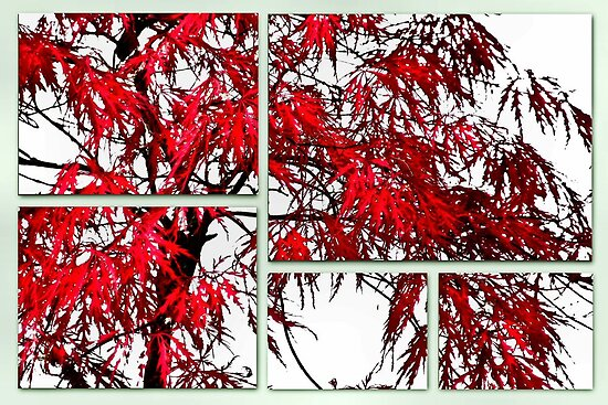 Japanese Maple by missmoneypenny