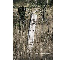 Old Fence Post Photographic Print