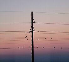Sunset Watchers, Florida Keys by opticallusion