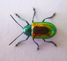 Dogbane Beetle on Paper by LeafLand