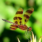 Halloween Pennant by shutterbug2010