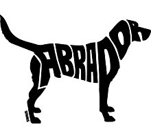 Labrador Black Photographic Print