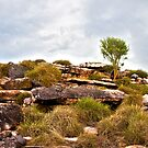 Ubirr tree 1 by tarnyacox