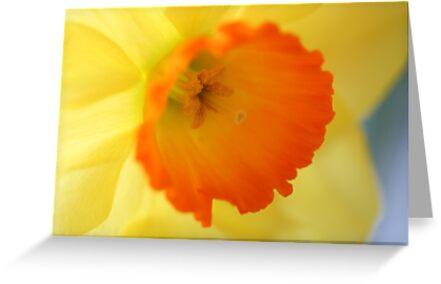 Enchanting Daffodil by Melani