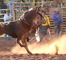 bucking brahma bull at the derby rodeo by nicole makarenco