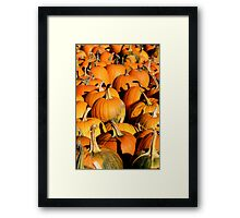 Pumpkin Patch Harvest Framed Print