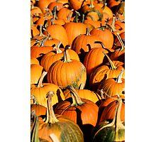 Pumpkin Patch Harvest Photographic Print