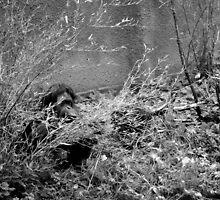 Hide & Seek by AmyMicheleW