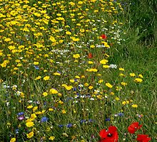 Wild flowers by Susan E. King