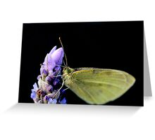 Lavender  with a Moth Greeting Card