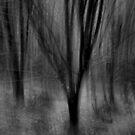 The Dusk Tree by Bruce  Watson