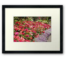 sea of pinks Framed Print