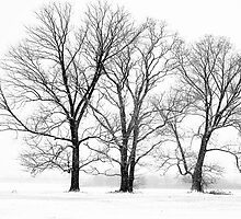 Winter Trees by RickBlanton