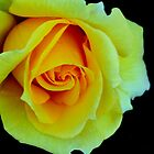 Roses by TeAnne
