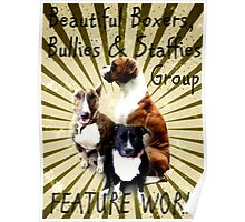 Beautiful Boxers, Bullies & Staffies Feature Banner Poster