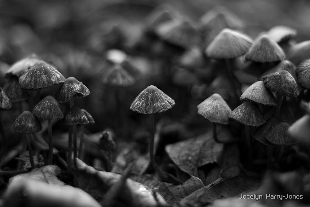 Mushroom army by Jocelyn  Parry-Jones