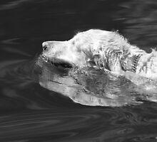 Wet Dog! by Lynn  Gibbons