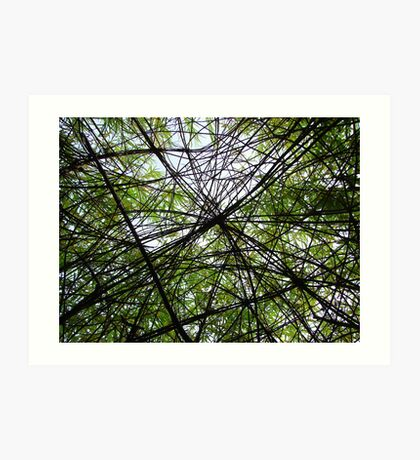 Willow Web Art Print