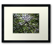 Willow Web Framed Print