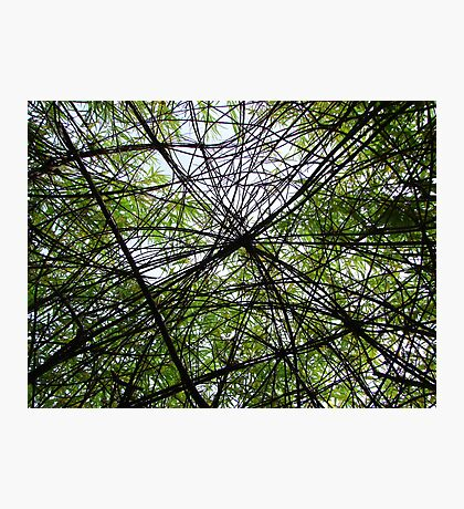 Willow Web Photographic Print