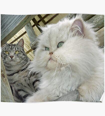 """Princess Kendra and Mia"" - THE GIRLS Poster"