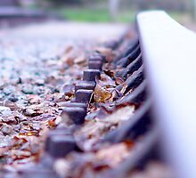 Leaves on the Line by Duncan Rowe