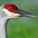 Sandhill crane in profile by jozi1