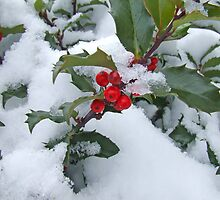 Snow Berry by Tom Gotzy