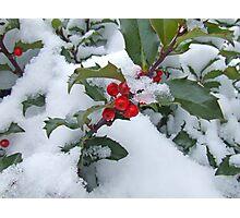Snow Berry Photographic Print