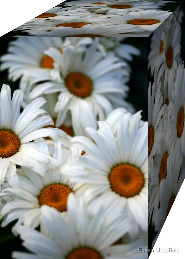 Box of Daisies by Susan Littlefield