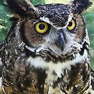 The Great Horned Owl by ReneR