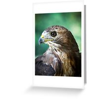 The Red Tail Hawk Greeting Card