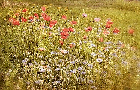 Poppies by Jessica Jenney