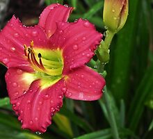 Droplets on the Petals by bannercgtl10