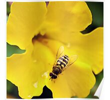 Hornet on Yellow Flower Poster