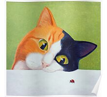 Cat with Ladybird Poster