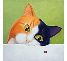 Cat with Ladybird Photographic Print