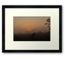 Foggy Sunrise in the Everglades Framed Print