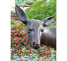"""Inquisitive """"White Tailed Deer"""" Photographic Print"""