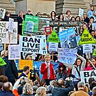 Ban Live Export by patcheah