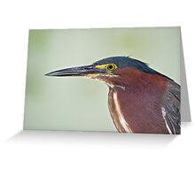 Green Heron Portrait  Greeting Card