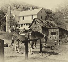 Blue Ridge Country by Jane Best
