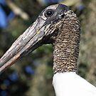 Wood stork portrait by jozi1