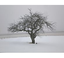 Maitland Tree Photographic Print