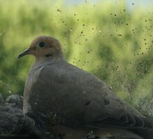 mourning dove and babies on a window sill by Hope A. Burger