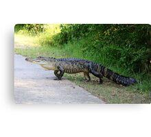 Gator Crossing Canvas Print