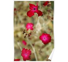 Wilting flowers Poster