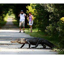 I Spy An Alligator Photographic Print